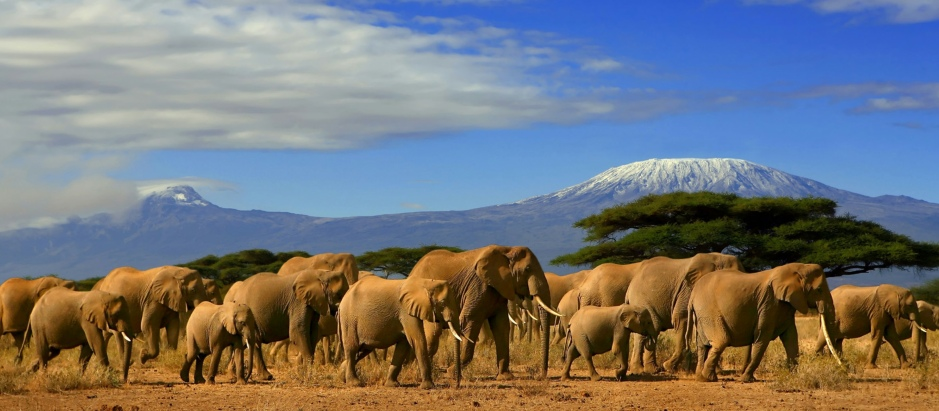African Elephants in the wilderness with mountains in the background